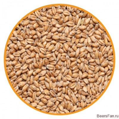 Солод Wheat malt, Viking malt